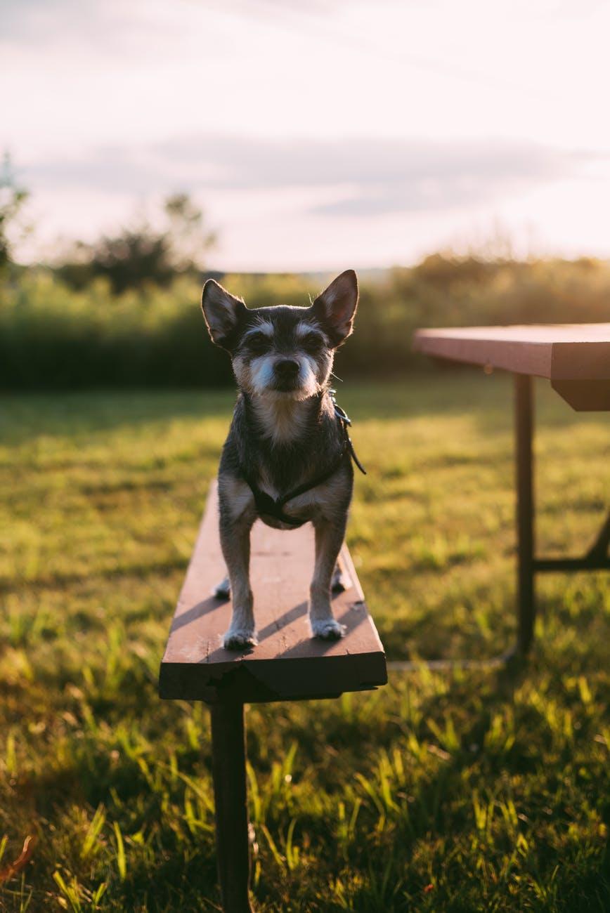 photo of dog on bench