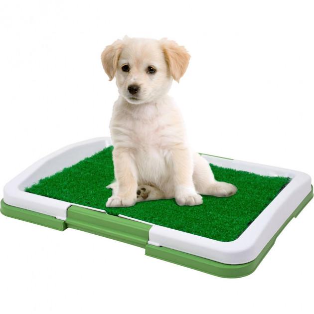 Щенок на зеленом коврике