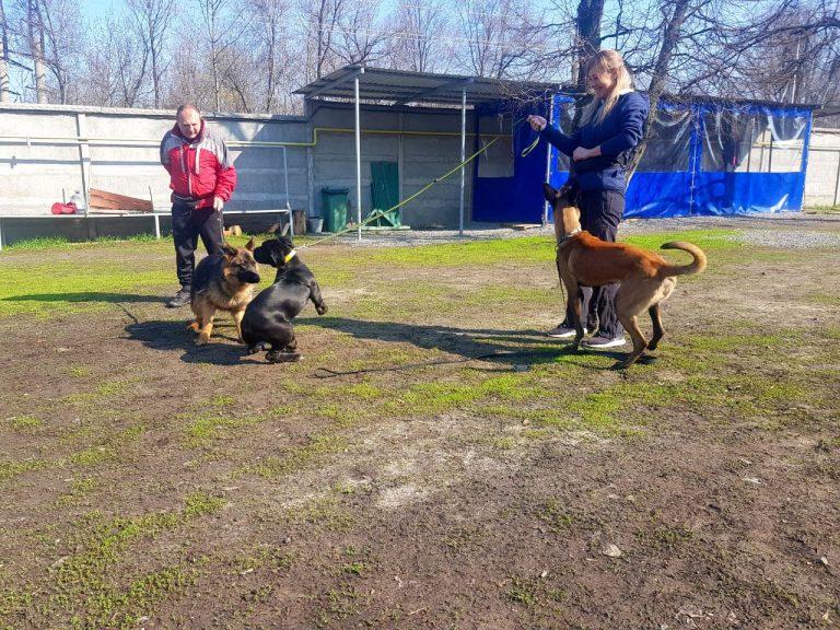 Послушание собак в кинологическом отделе Бриг