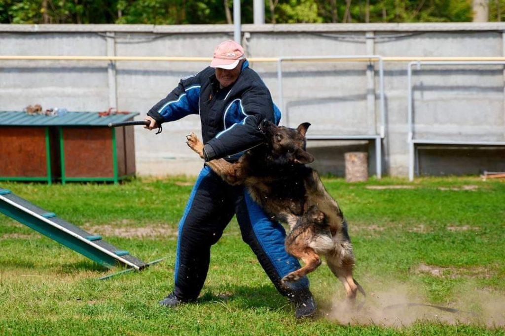 Охранная собака БРИГ