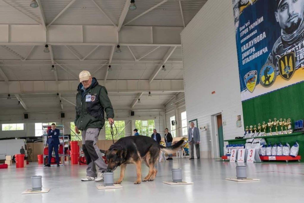 Чемпионат среди собак детекторов