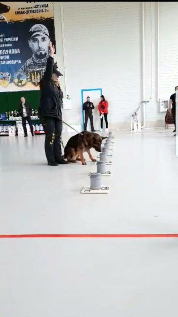Определение взрывчатки на чемпионате среди собак-детекторов
