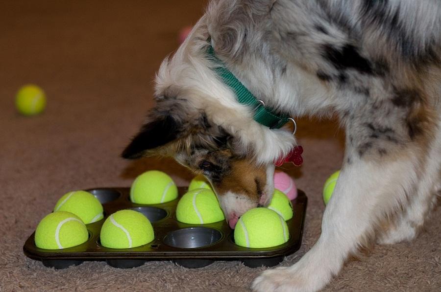 Игровая агрессия у собак №6. Статья Дрессировочного Центра Бриг