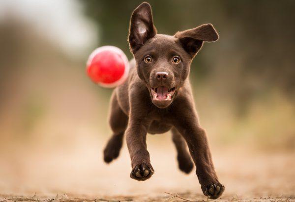 Игровая агрессия у собак №7. Статья Дрессировочного Центра Бриг